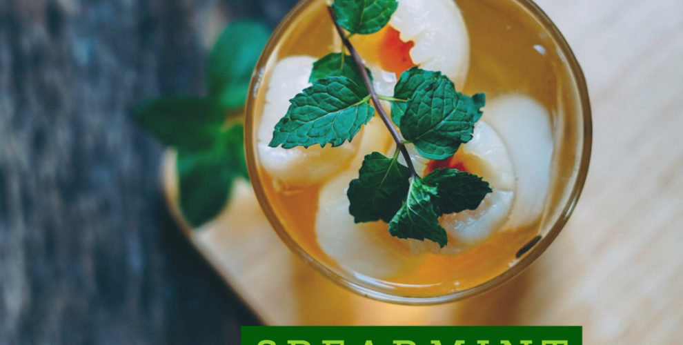 Spearmint TEA Mojito recipe from distinctly tea