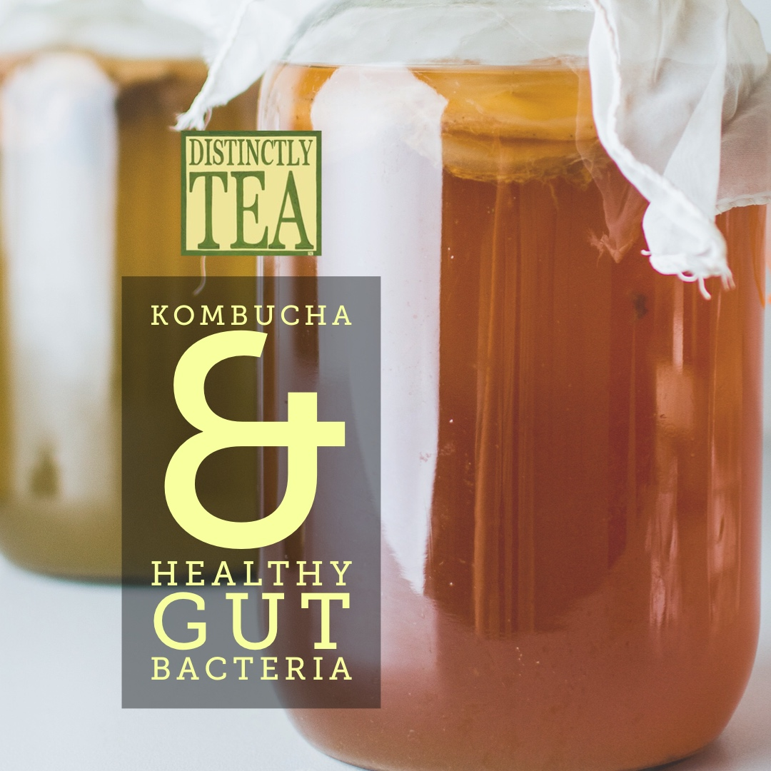 Kombucha and healthy gut web