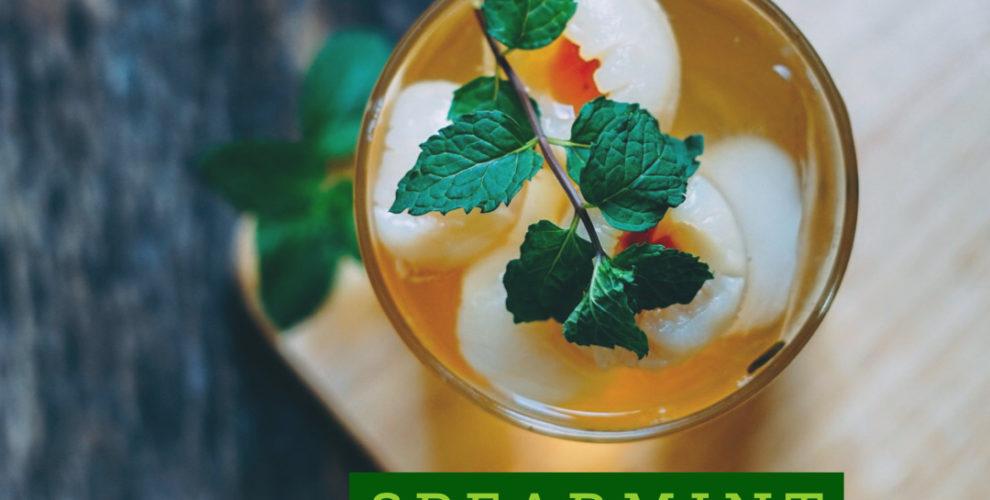 Spearmint TEA Mojito recipe from distinctly tea